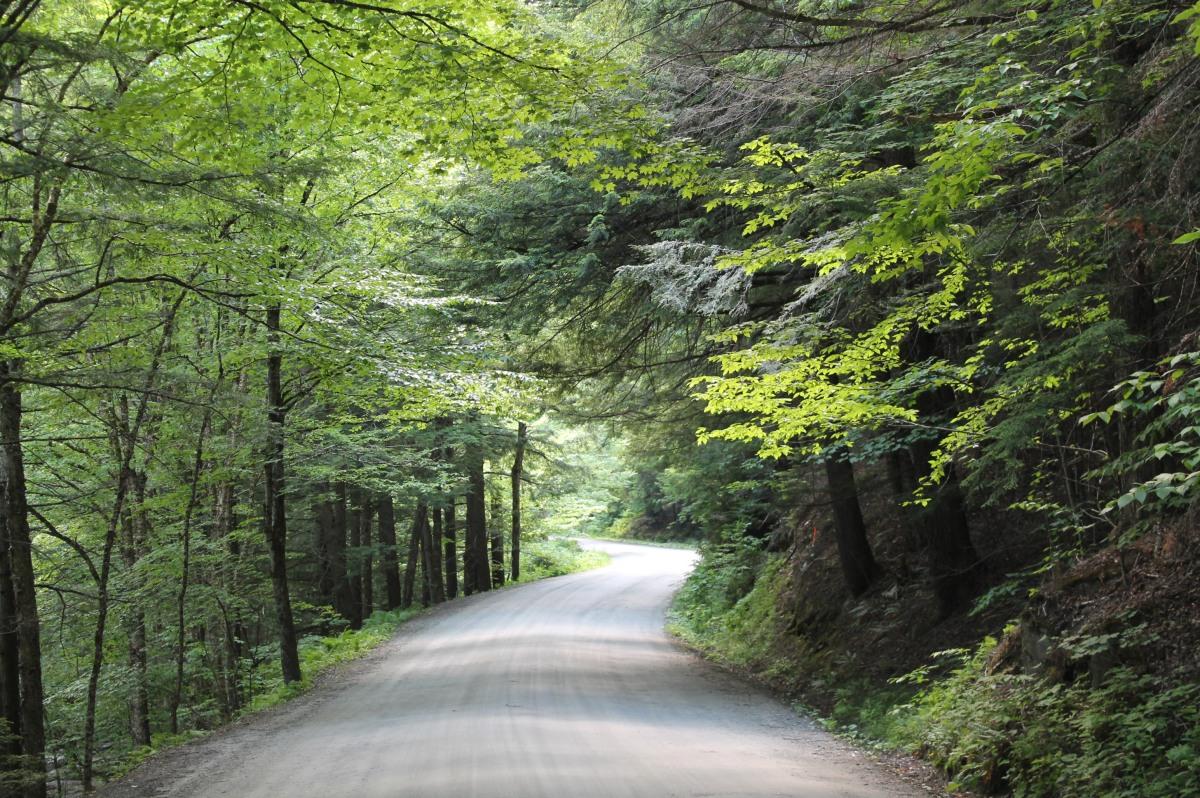 Trees & RoadsRedux