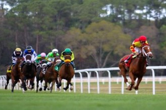 horserace cropped